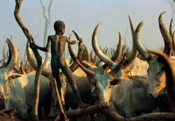 Dinka Child Climbing Among Horns, South Sudan