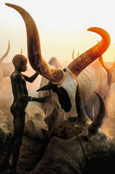 Dinka boy with hong horned bull, South Sudan
